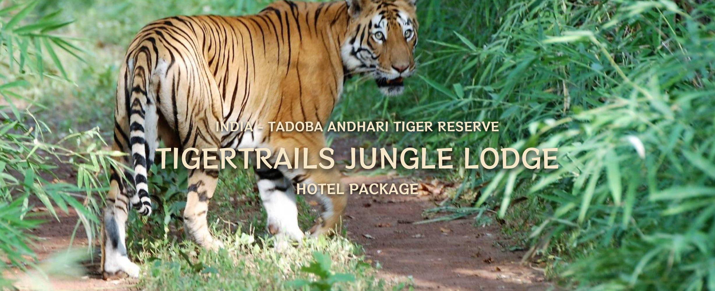 tiger_trails_3